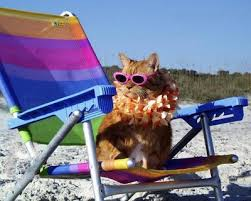 Cats at the Beach